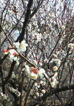 image/hirosh-2006-02-27T18:59:14-1.jpg