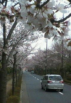 image/hirosh-2006-03-27T14:34:38-1.jpg