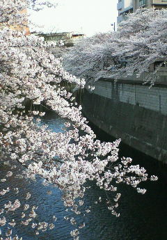 image/hirosh-2006-03-29T17:21:31-1.jpg