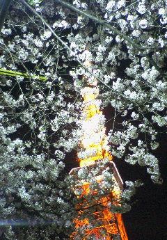 image/hirosh-2006-03-31T18:59:03-1.jpg