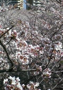image/hirosh-2006-04-06T14:58:38-1.jpg